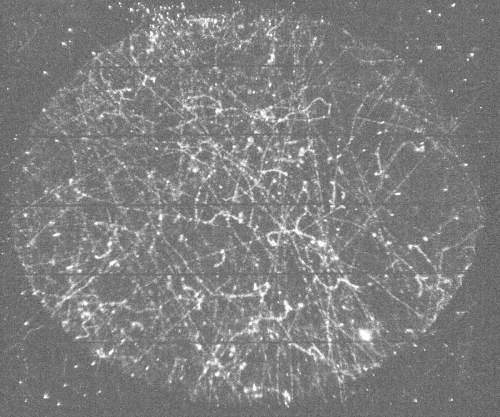 """Fig 2: tracks due natural radioactivity and cosmic rays """"seen"""" in a 5 seconds time interval by the detector. The elliptical shape (20 cm and 24 cm long axes) of the drift field cage is well visible"""